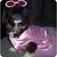Adopt A Pet :: Muffin - Mays Landing, NJ