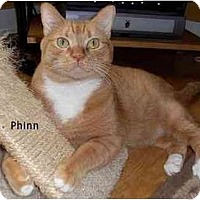 Adopt A Pet :: Phinn - Portland, OR