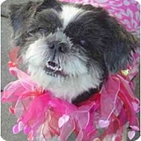 Adopt A Pet :: Peanut - Mays Landing, NJ