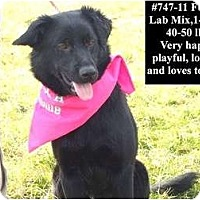 Adopt A Pet :: # 747-11 - ADOPTED! - Zanesville, OH