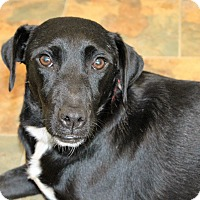 Adopt A Pet :: Effie - Starkville, MS