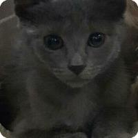 Adopt A Pet :: Ren - Reston, VA