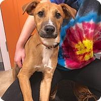 Adopt A Pet :: Bogie - Sparta, NJ