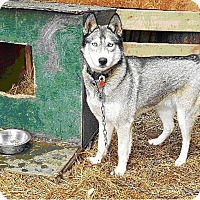 Adopt A Pet :: Adoption Pending!!!!  Timber - Cavan, ON