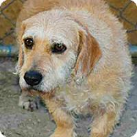 Adopt A Pet :: Sally - Jarrell, TX