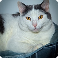 Adopt A Pet :: Marshall - Wellesley, MA