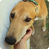 Adopt A Pet :: Redmond - Randleman, NC
