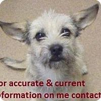 Adopt A Pet :: Baxter - Seattle, WA