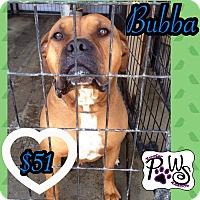 Adopt A Pet :: Bubba - Fowler, CA