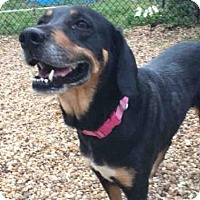 Adopt A Pet :: LAUREL - Jacksonville, FL