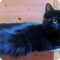 Adopt A Pet :: SHINE - Putnam Hall, FL