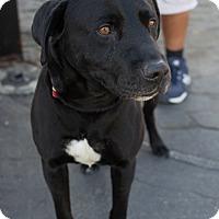 Adopt A Pet :: Shadow - Fallbrook, CA