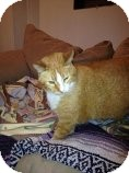 Domestic Shorthair Cat for adoption in Des Moines, Iowa - Flame