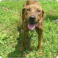 Adopt A Pet :: Dutchess-new pics - Glastonbury, CT