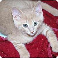 Adopt A Pet :: Hurley - Markham, ON