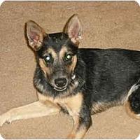 Adopt A Pet :: Sassy - Phoenix, AZ