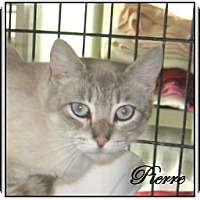 Adopt A Pet :: Pierre - Galloway, NJ