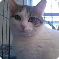 Adopt A Pet :: Archer - Ringwood, IL