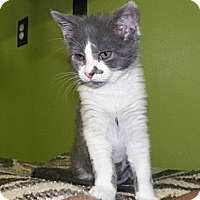 Adopt A Pet :: Madeline - Dover, OH