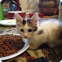 Adopt A Pet :: Peshi - Monroe, GA