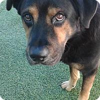 Adopt A Pet :: Drake - Sacramento, CA