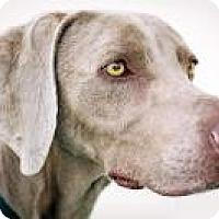 Adopt A Pet :: Hunter - Sun Valley, CA