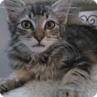 Adopt A Pet :: STORMY - Brea, CA