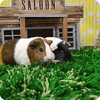 Adopt A Pet :: Qweenie & Lizzie - Brooklyn, NY