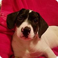 Adopt A Pet :: Trenna (see her video) - Trenton, NJ
