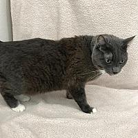 Adopt A Pet :: Grayson - Canyon Country, CA