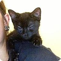 Adopt A Pet :: Pitch - Woodlawn, TN