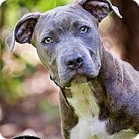 Adopt A Pet :: Bri - Orlando, FL