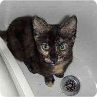 Adopt A Pet :: Meli - Davis, CA
