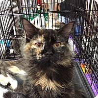 Adopt A Pet :: Faith - Harrisburg, NC