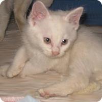 Adopt A Pet :: Mystic - Dallas, TX