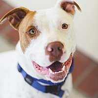 Adopt A Pet :: Butters - Lompoc, CA