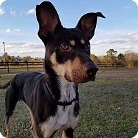 Adopt A Pet :: Athena Rose - Woodstock, GA