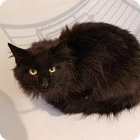 Adopt A Pet :: Jasper - Jeannette, PA