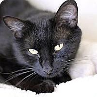 Adopt A Pet :: Charlie Freeze - Chicago, IL