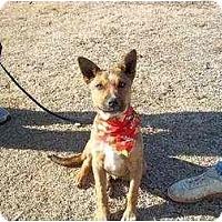 Adopt A Pet :: Buddy - Adamsville, TN