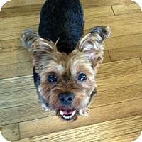 Adopt A Pet :: Allie - West Palm Beach, FL