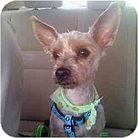 Adopt A Pet :: Tucker - Homestead, FL