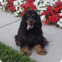 Adopt A Pet :: Luigi - Franklin, NC