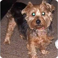 Adopt A Pet :: Regis - Toronto/Etobicoke/GTA, ON
