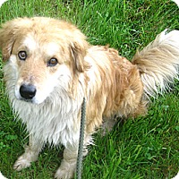 Adopt A Pet :: # 171-14  ADOPTED! - Zanesville, OH
