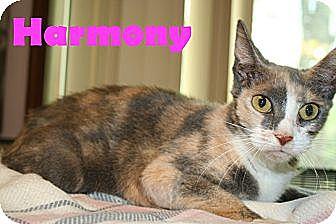Domestic Shorthair Cat for adoption in East Stroudsburg, Pennsylvania - Harmony