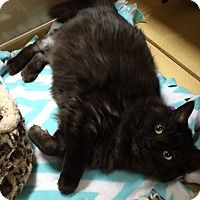 Adopt A Pet :: Missy - Chesterfield Township, MI