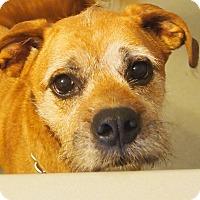Adopt A Pet :: Samantha - Prole, IA