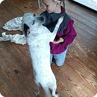 Adopt A Pet :: Chip - Lebanon, CT