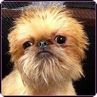 Adopt A Pet :: LADYBUG - ADOPTION PENDING - Seymour, MO